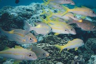Tauchen auf Aitutaki mit Dive Aitutaki