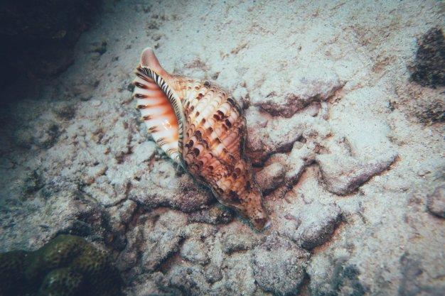 Die bunte Unterwasserwelt von Aitutaki