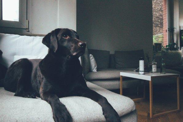 Bosch Smart Home Hundekamera