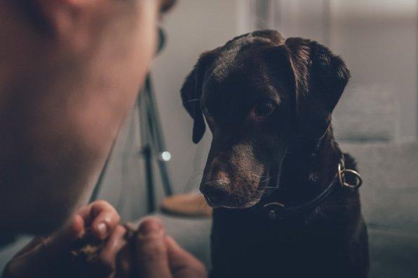 Leben mit Hund