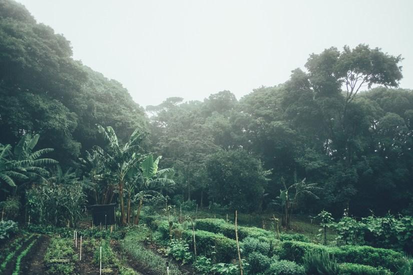 Cafè de Monteverde