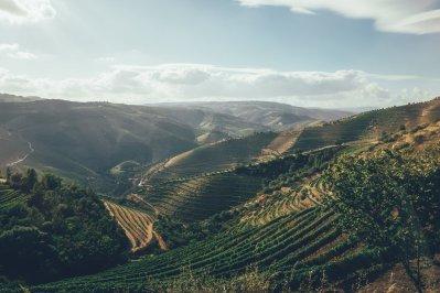 Weinberge in Portugal