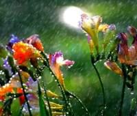 Последний день весны будет с грозами, градом и жарой до +33°