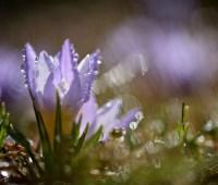 Синоптики обещают дожди с грозами