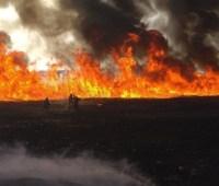 На Херсонщине горят плавни