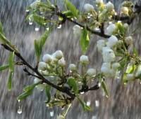 Большинство областей Украины 9 мая накроют дожди