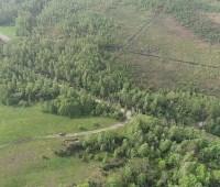 В Житомирской области ураган уничтожил 100 гектаров леса
