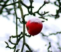 От +13° до -3° и мокрый снег: какими будут последние дни осени
