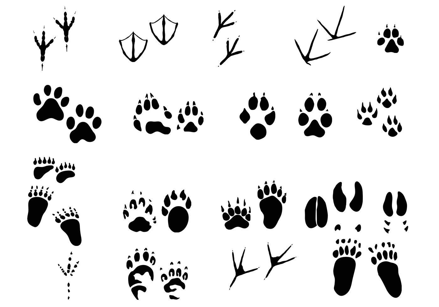 Amazing Animal Tracks Vector Pack