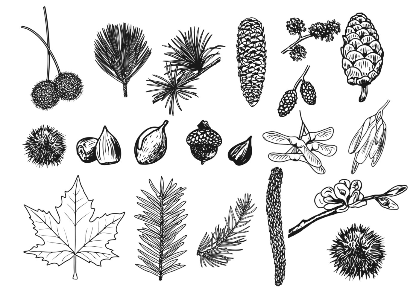 Things In The Forest Vector Pack