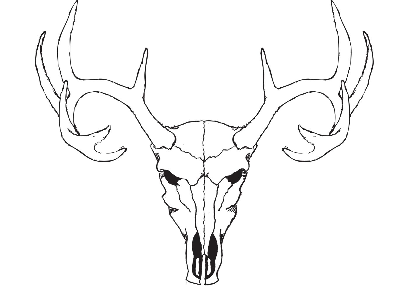 Bison Head Drawing