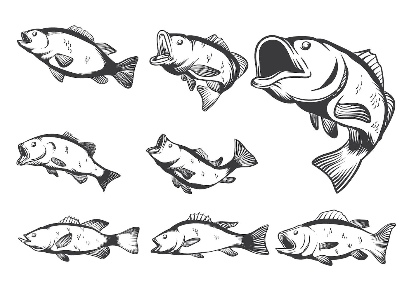 Bass Fish Vectors