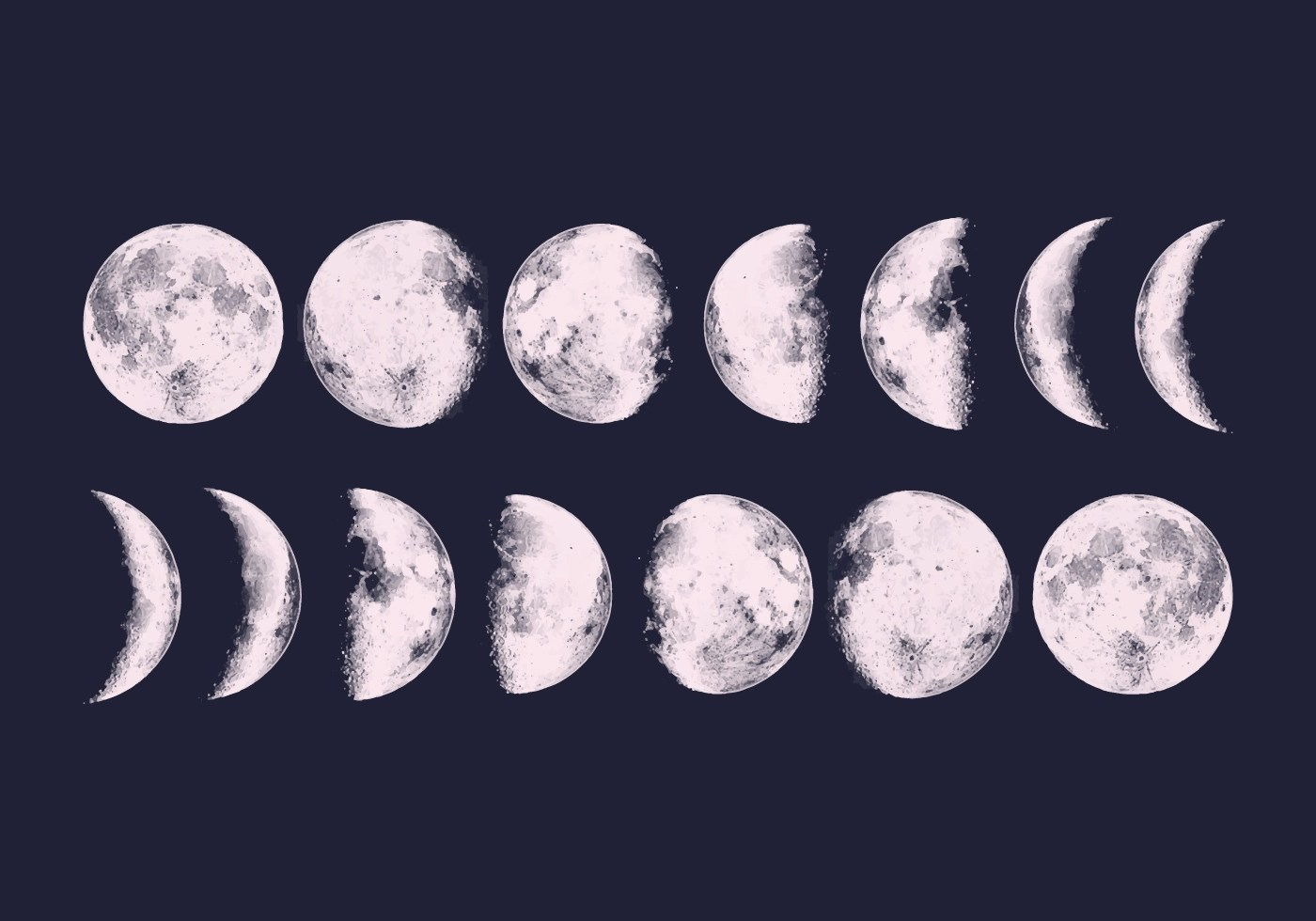 Vector Moon Phases