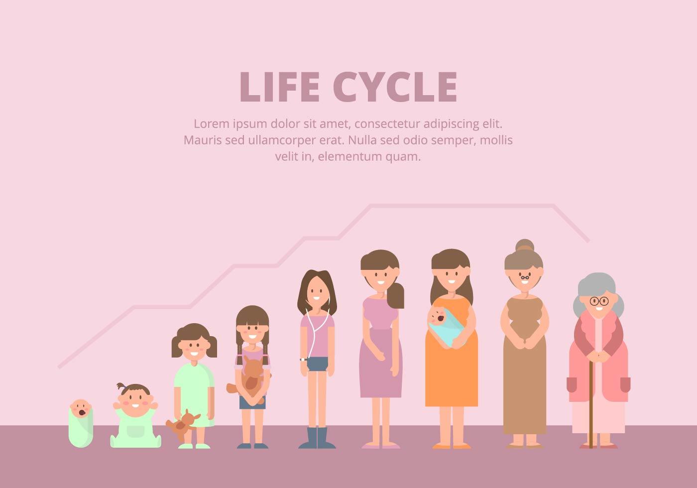 Life Cycle Illustration