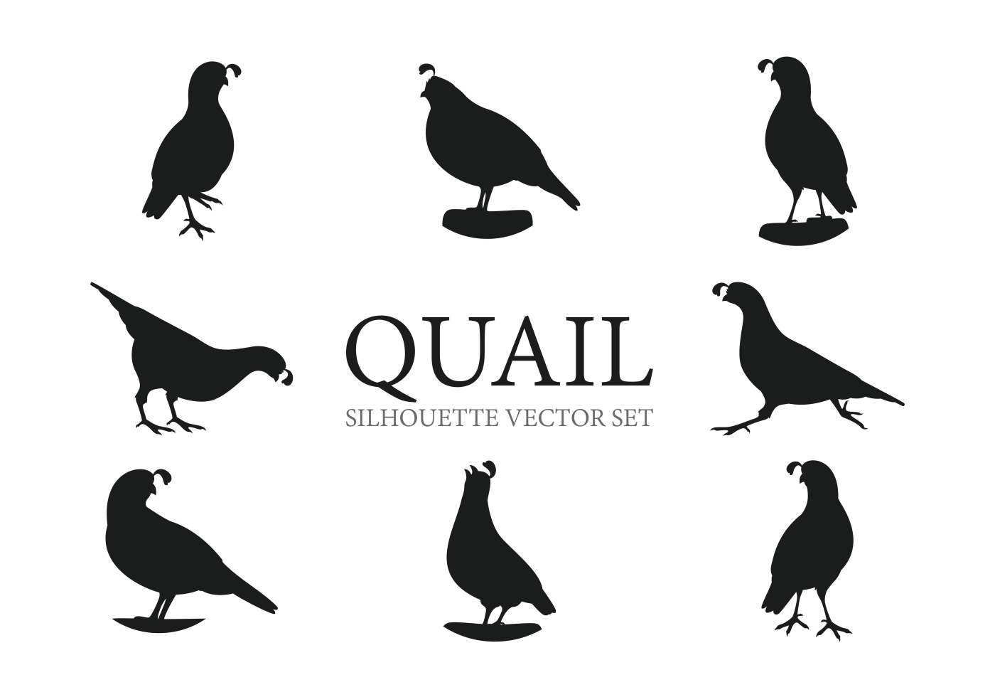 Bobwhite Quail Free Vector Art