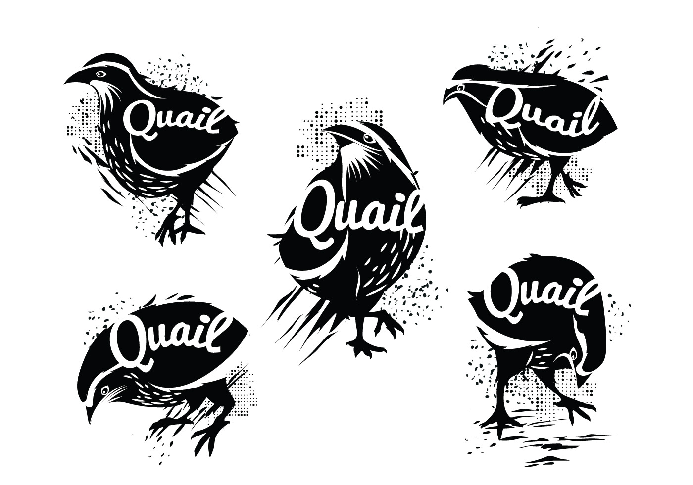 Illustration Of Silhouette Of Standing Common Quail With