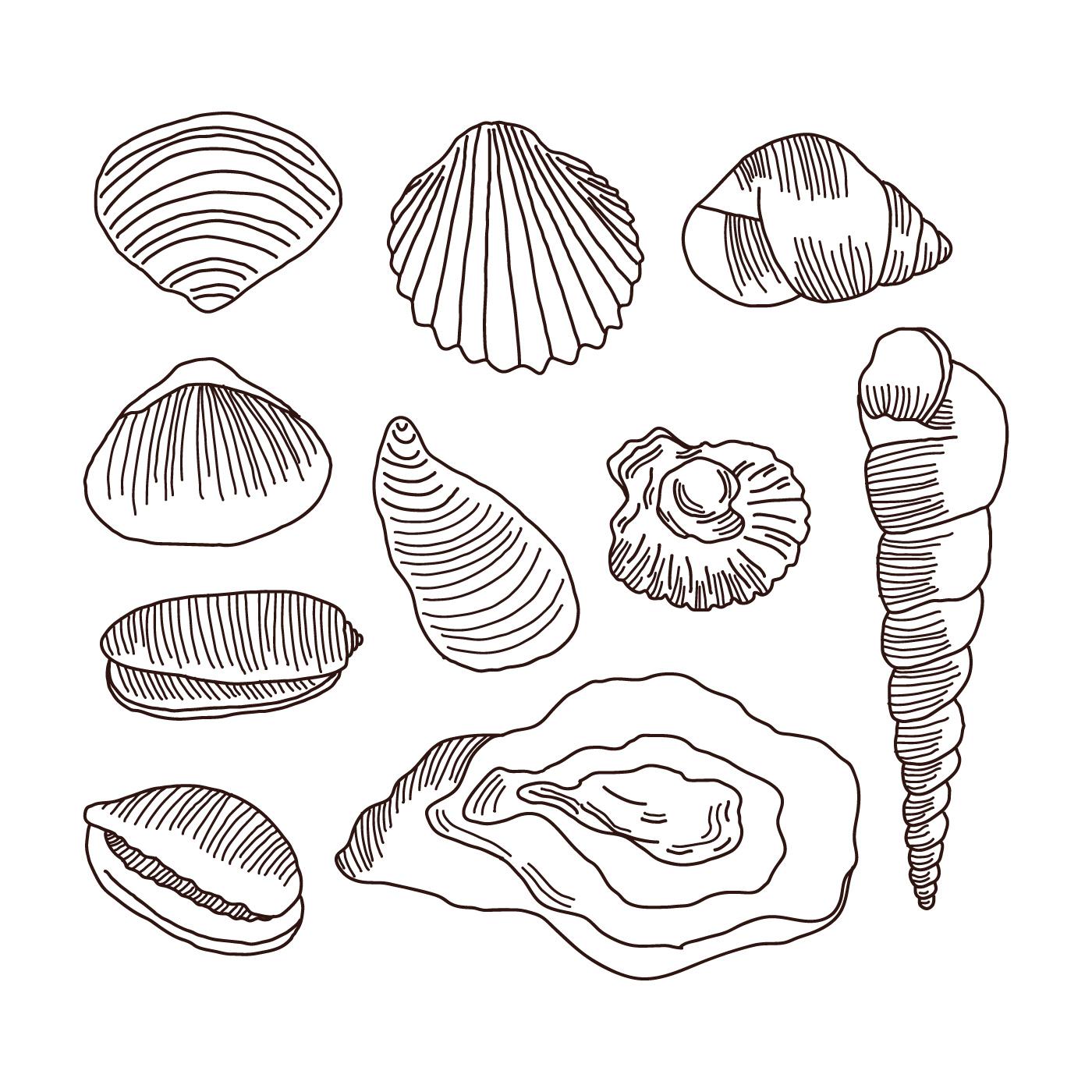 Beach Seashells Drawings