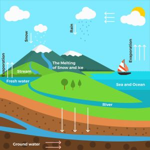 Flat water cycle infographic Vector  Download Free Vector Art, Stock Graphics & Images