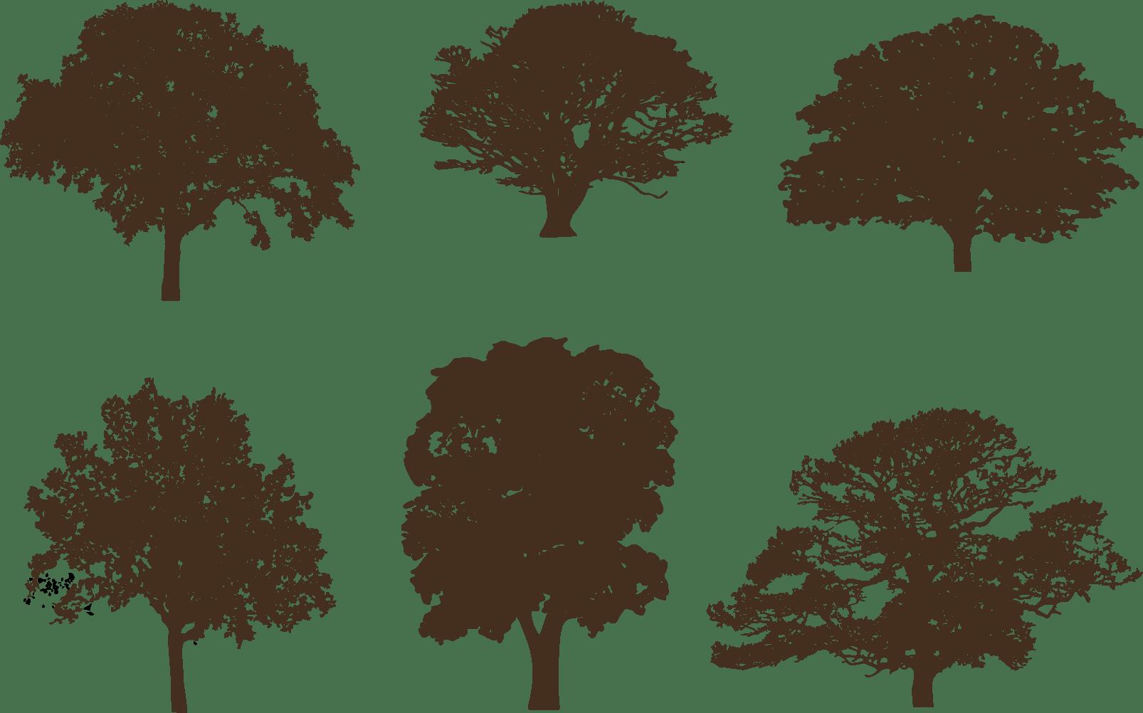 Oak Tree Silhouettes Download Free Vector Art Stock