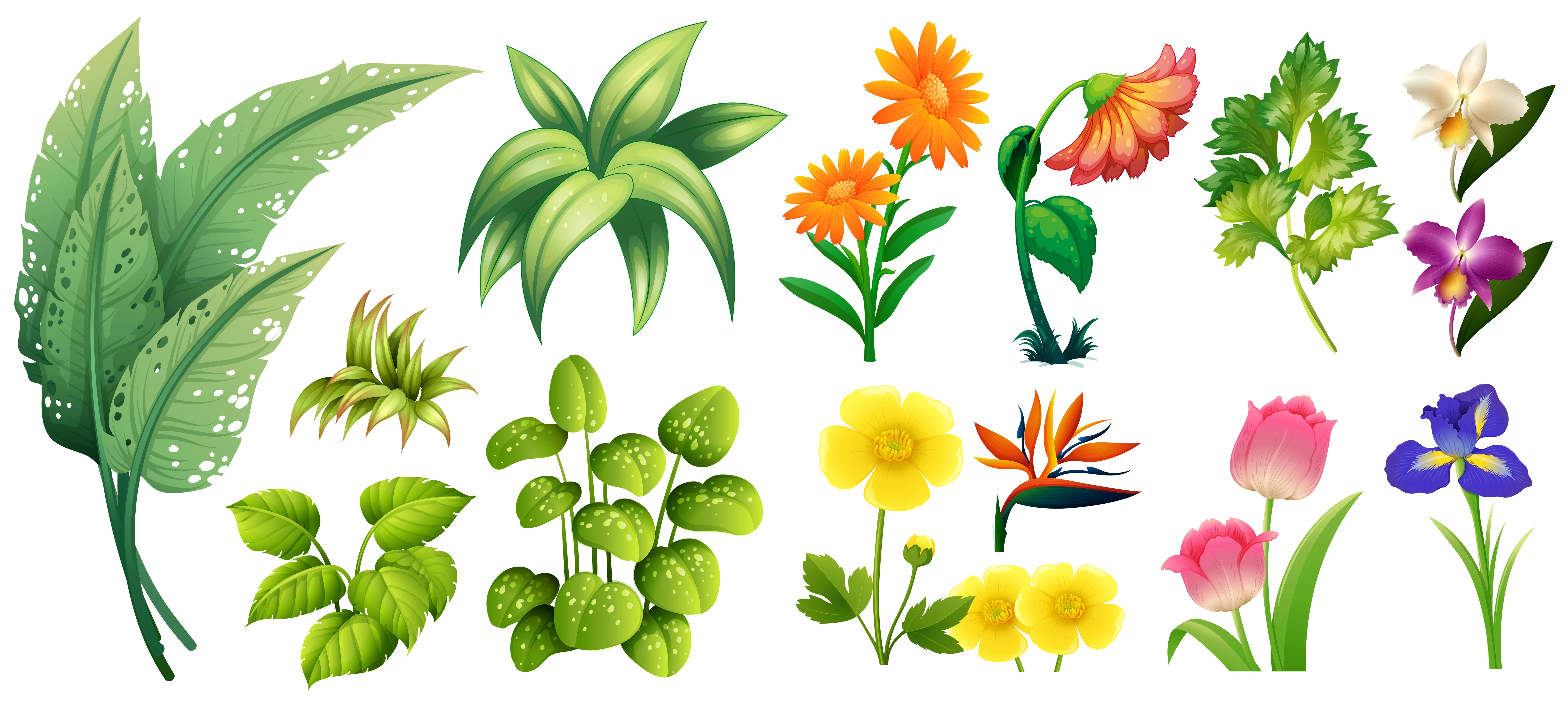 Different Types Of Flowers And Leaves