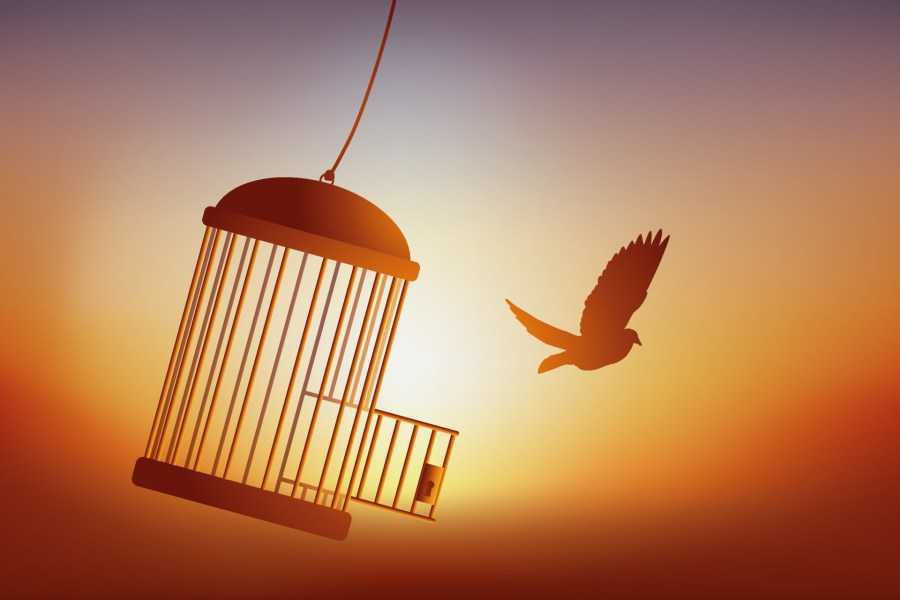 The Freedom of a Bird Leaving its Cage. 2170368 Vector Art at Vecteezy
