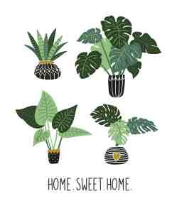 House Plants With Big Leaves Isolated On The White Background Tropical Garden Vector Set Download Free Vectors Clipart Graphics Vector Art