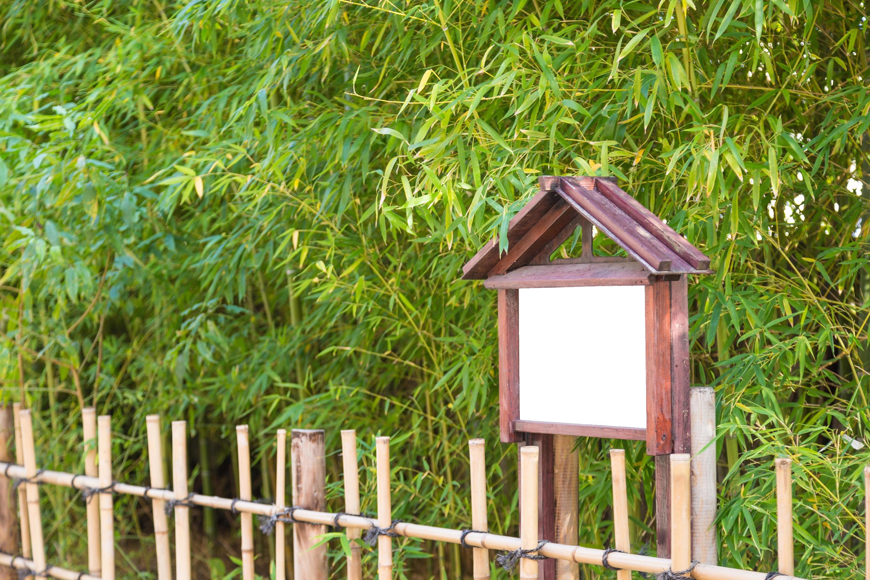 bambou devant les bambous banque