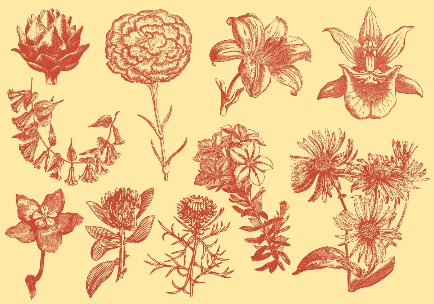 illustrations de fleurs exotiques en