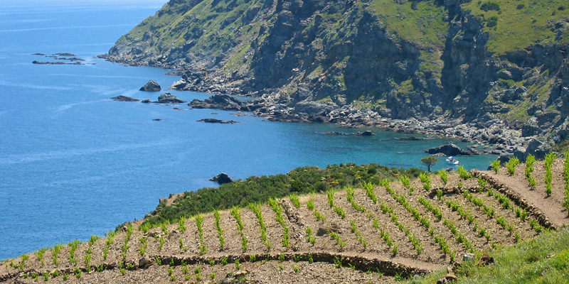 Coastal White Wines Are The Perfect Pairing For Seafood