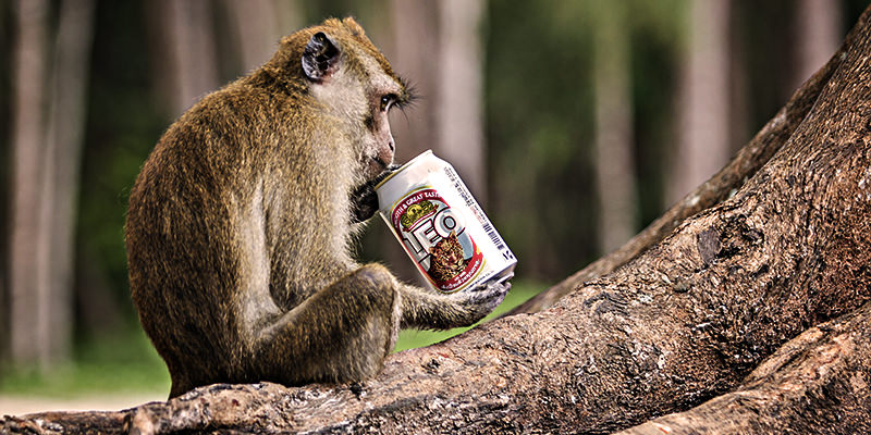 Drunken Monkeys: A Scientific Explanation for Our Drinking