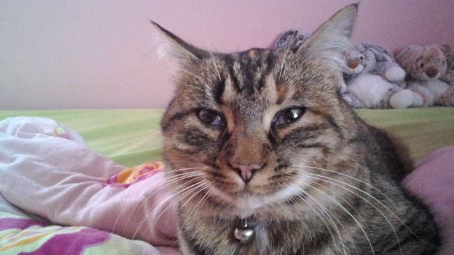 forum soigner son chat