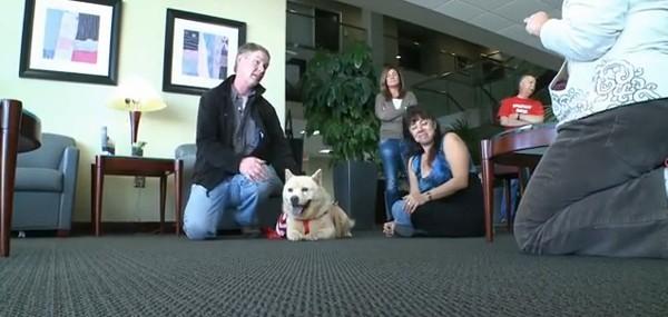 Ce chien abandonné a attendu le retour de ses maîtres pendant 3 ans