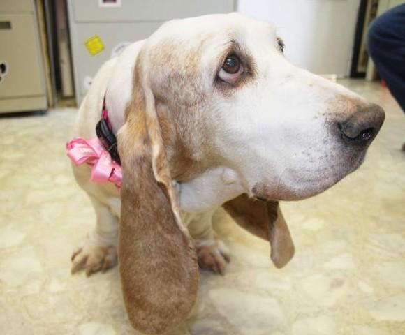 un chien et son maître réunis après 10 ans de séparation