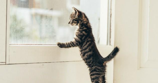 chat qui veut sortir