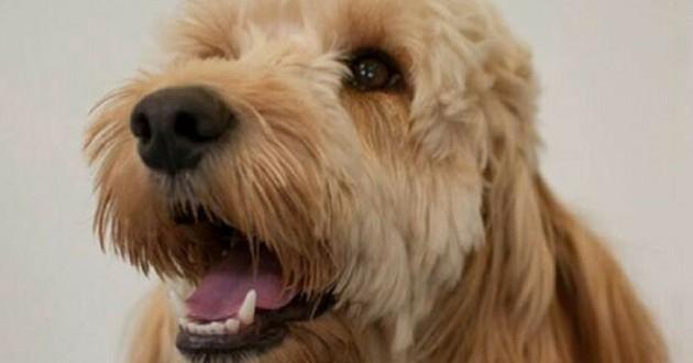 chien sauve enfant trisomie sèche-linge
