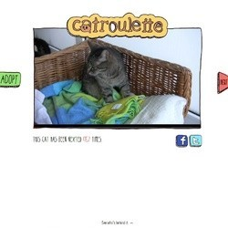 Catroulette site adoption chats refuge