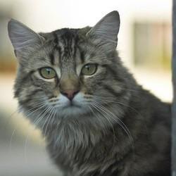 Des centaines de chats portés disparus dans l'Essonne