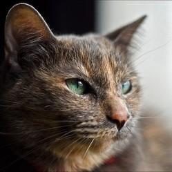 un chat s'enfuit pour retrouver sa maîtresse dans sa maison de retraite