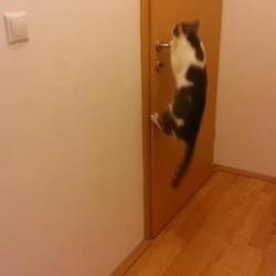 17 mai 2013 nuage ciel d 39 azur - Comment empecher un chat de gratter a la porte ...