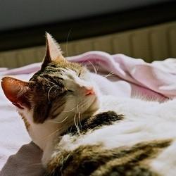 Coup de chaleur nuage ciel d 39 azur - Coup de chaleur chat symptomes ...