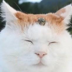 vidéo chat mignon