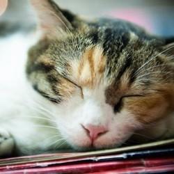 des chats et des livres une petite librairie devient un refuge pour chats errants nuage ciel. Black Bedroom Furniture Sets. Home Design Ideas