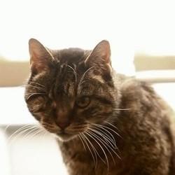 doux vieux noir chatte