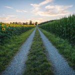 Strategico, sicuro ed attrattivo: il comparto agroalimentare continua ad attrarre investimenti