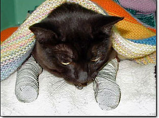 cat after declawing