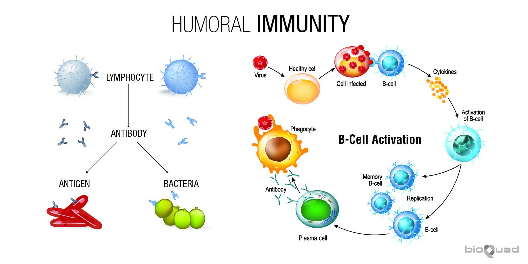 Immune System Bioquad Sports