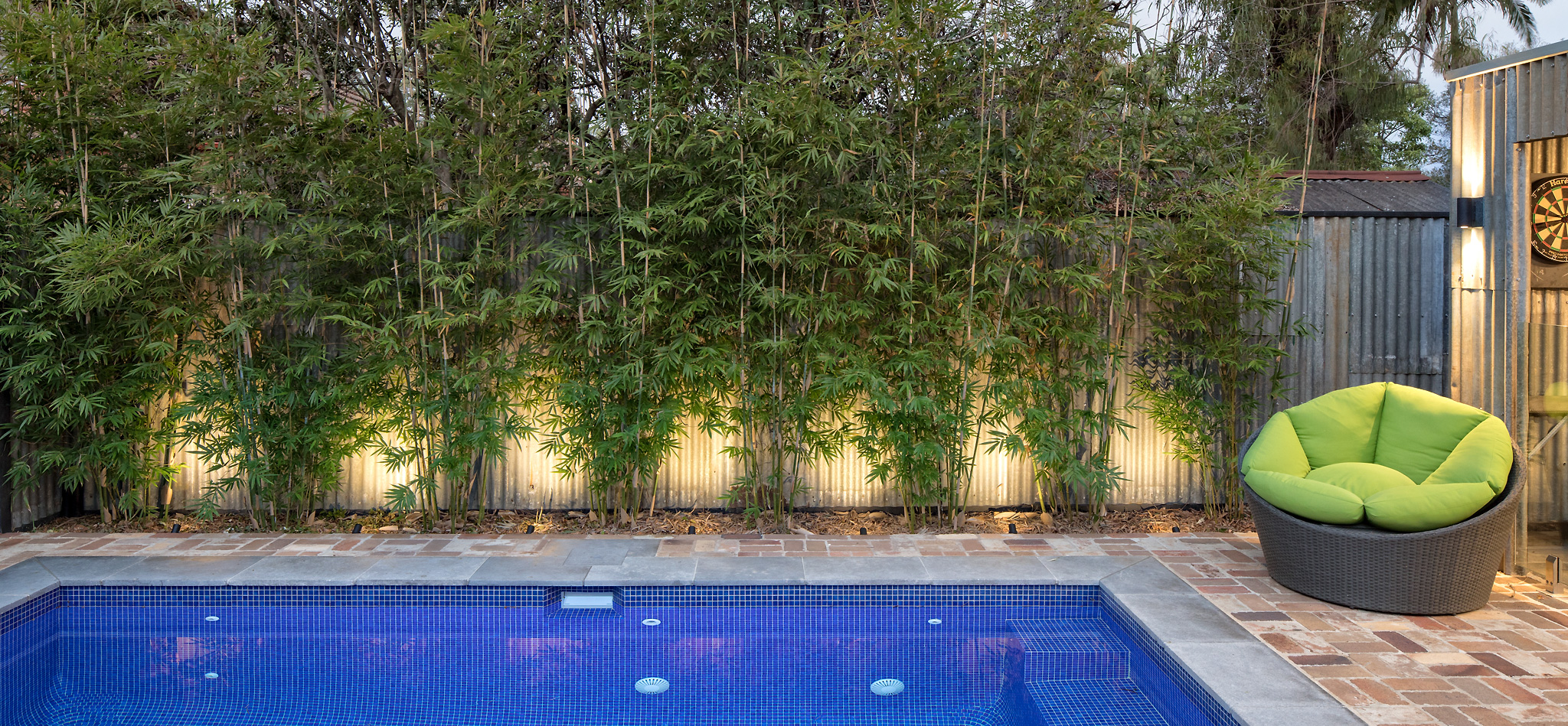 Non Clumping Bamboo