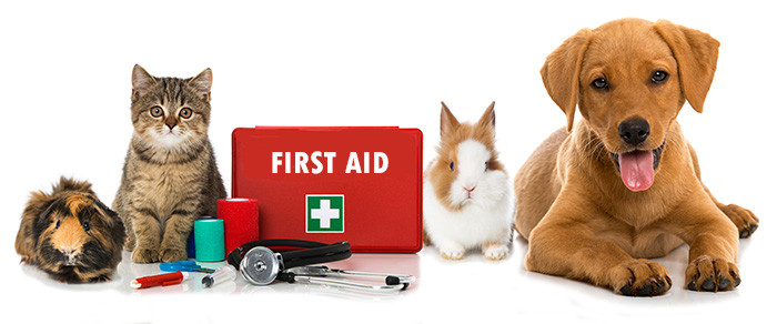Image result for National Pet First Aid