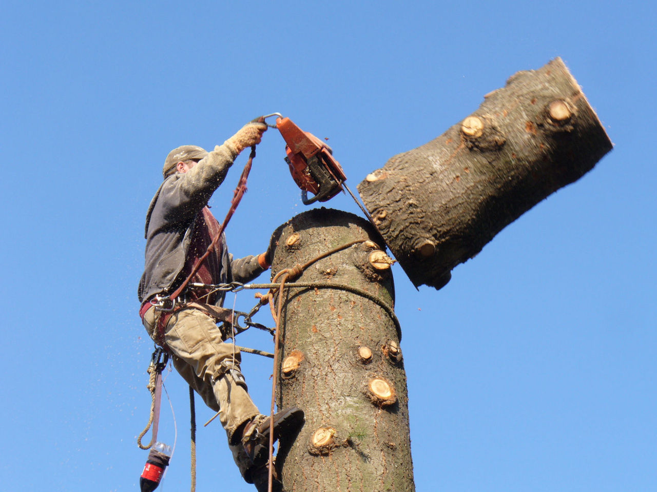 Image result for tree removal
