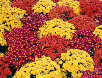 Best Perennials Zone 8